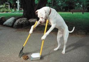 Dog picking up dog poop.