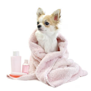 dog, pink, grooming, bath